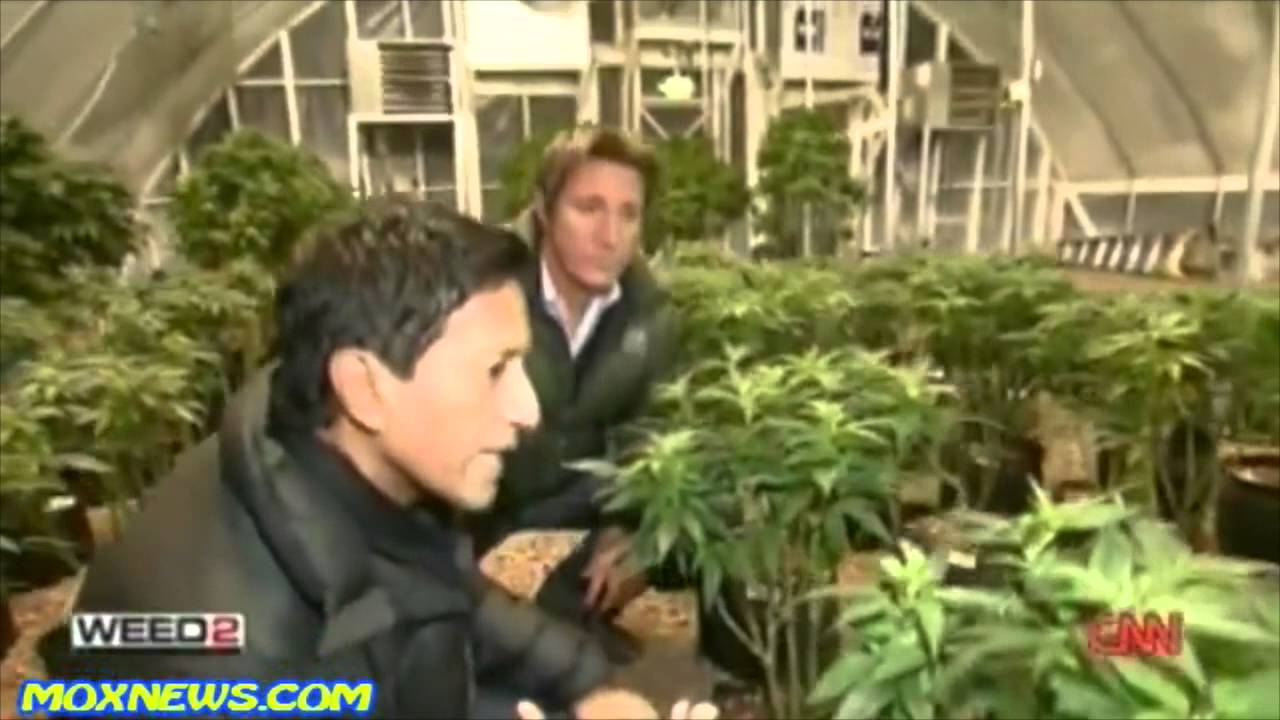 Watch Weed 2 | Dr. Sanjay Gupta | Medical Cannabis | Hemp Seeds