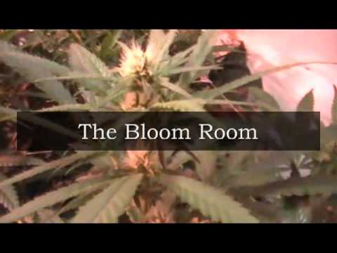Legal Two Patient Arizona Medical Marijuana Grow