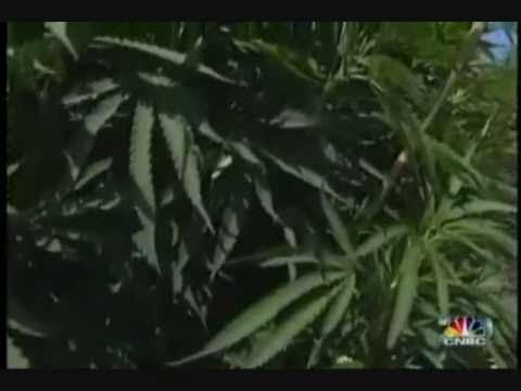 Marijuana VS Cannabis E-Facts 2012- (Official [HD] Video) (Weed Remix) Diknek Lorrie's