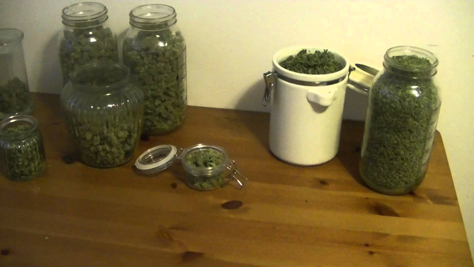 Organic CFL indoor Medical Marijuana Grow Part 10