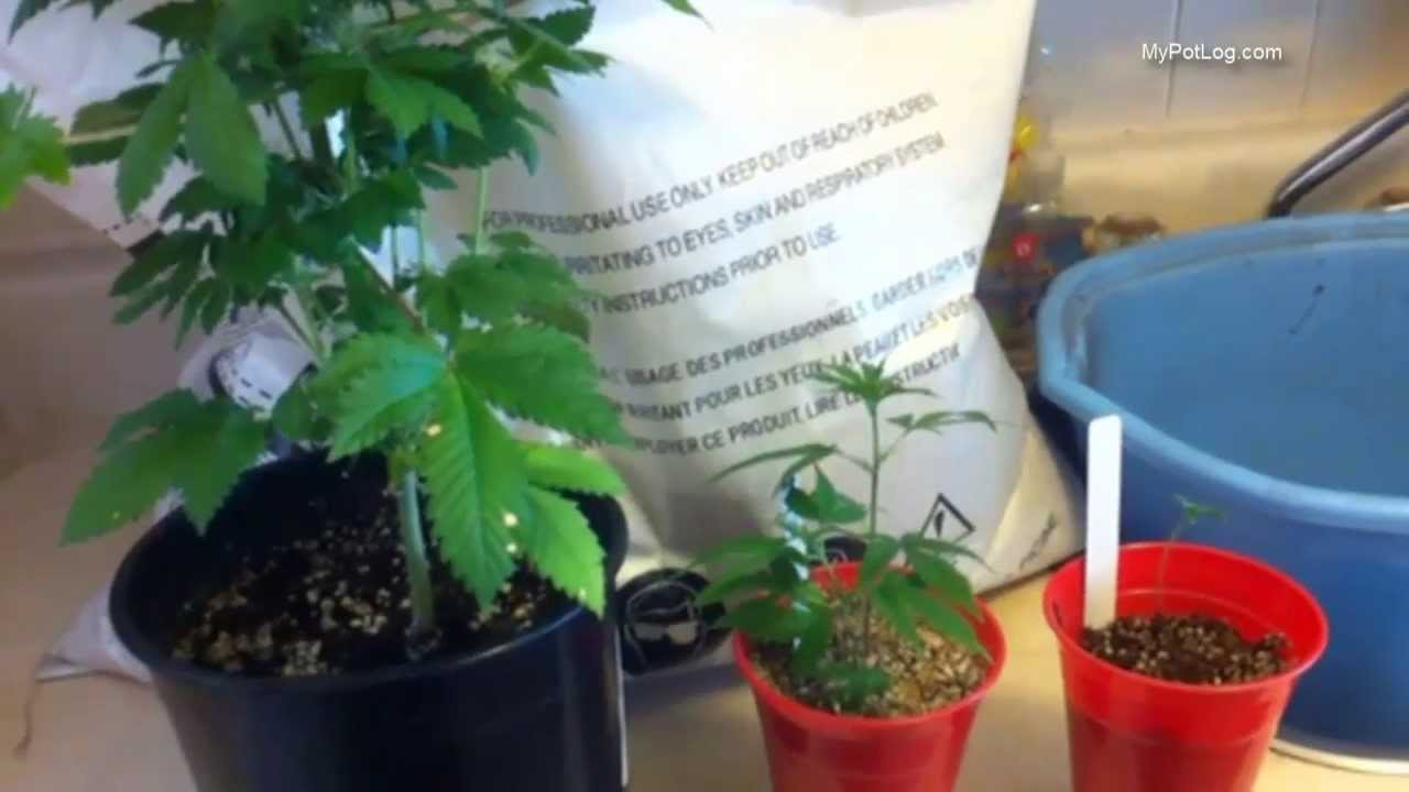 Best Soil Mix For Cannabis Seedlings and Flowering Marijuana Plants – Home Weed Grow Tips